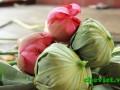 Sản phẩm trà ướp trong bông sen Hồ Tây, hay còn gọi chè ướp sen tươi, chè ướp sổi.