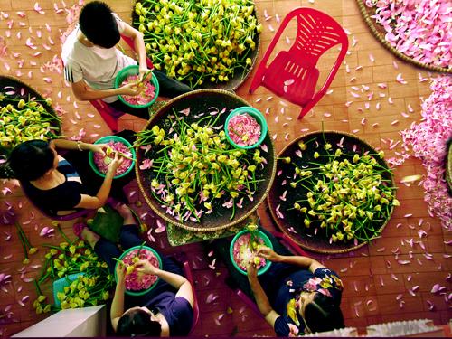 Công đoạn tách gạo sen trong quá trình ướp trà sen