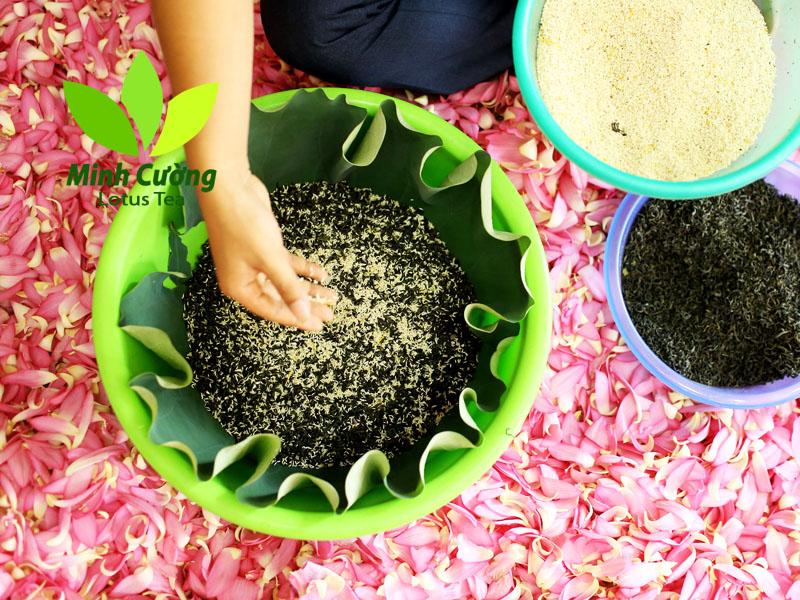 Công đoạn ướp trà với gạo sen