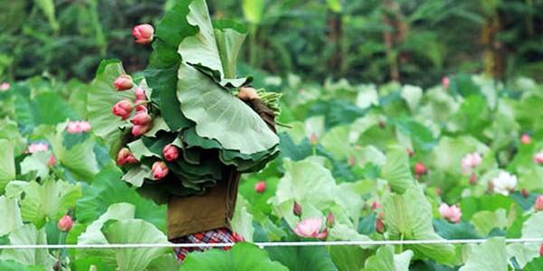 Du lịch thưởng thức trà sen Hà Nội
