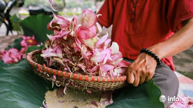 Làm Chè ướp hoa sen Hồ Tây