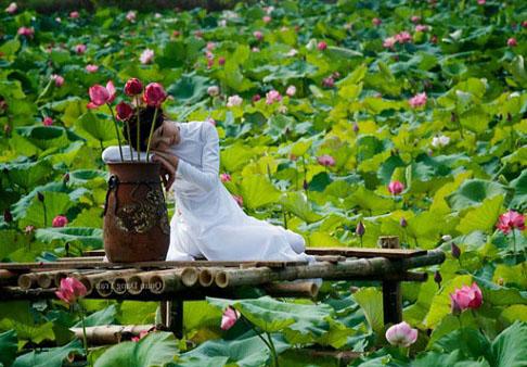 Đầm sen Hồ Tây đẹp mê hồn