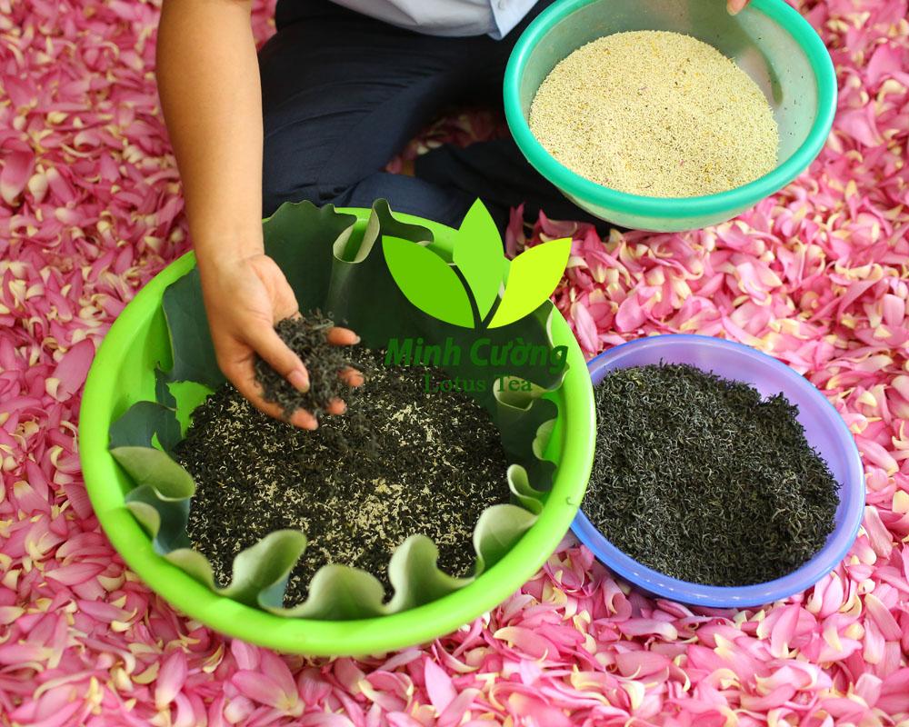 Công đoạn ướp ủ gạo sen với trà